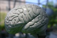 10 Ways to Enhance Brain Fitness Online