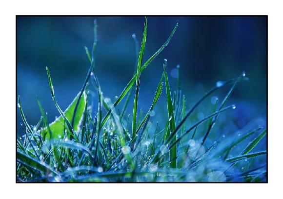 10 Beautiful Green Grass Wallpapers