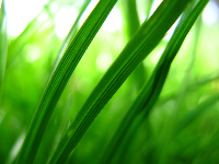 10 Beautiful Green Grass Wallpapers
