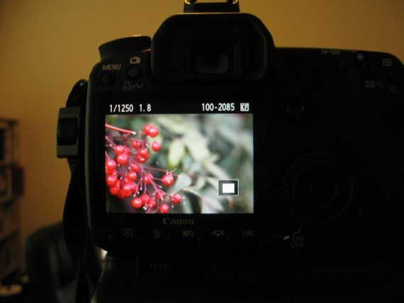 how to read digital camera details
