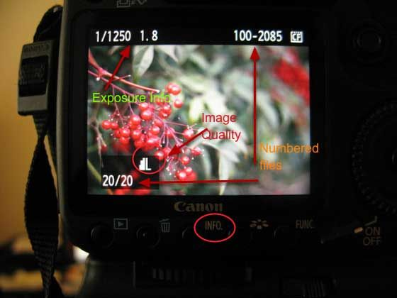 how to use an image playback on digital camera