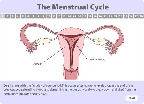 keep track of period online