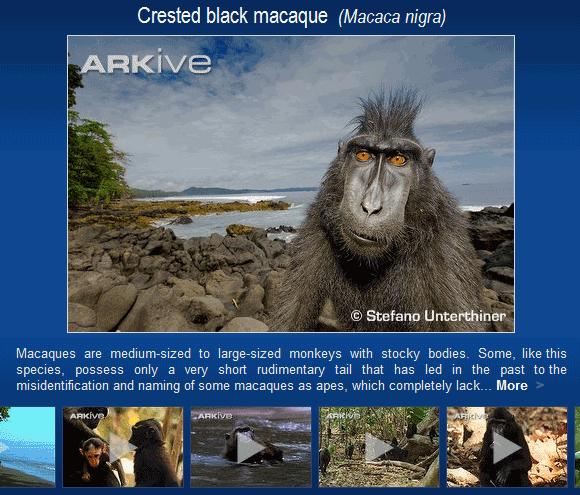 endangered wildlife species