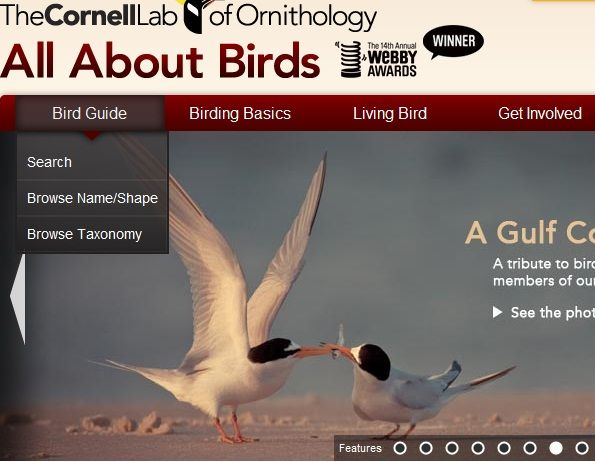 online encyclopedia of birds