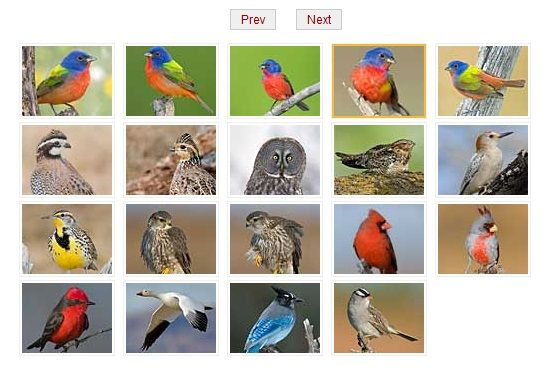 online bird encyclopedia