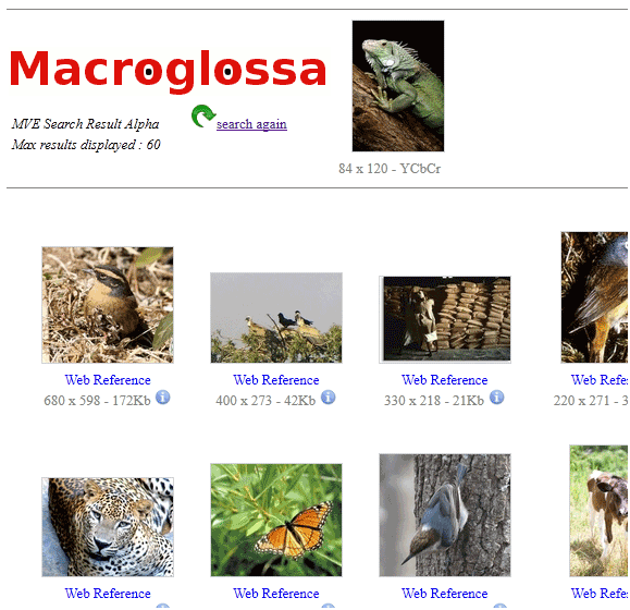 macro glossa11   MacroGlossa: Find Similar Images & Identify Objects In Images