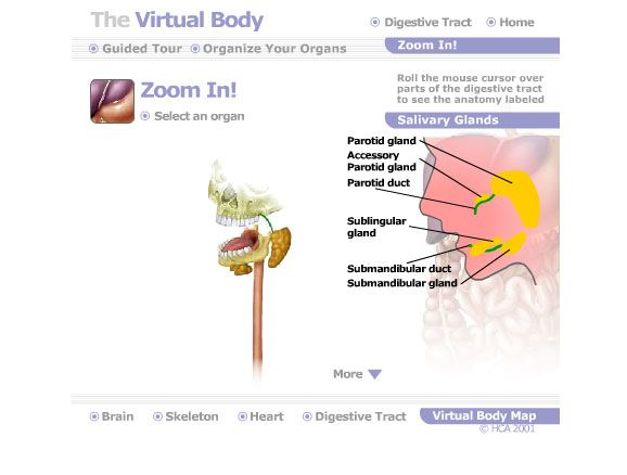 interactive human anatomy