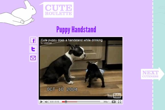 cute animal videos