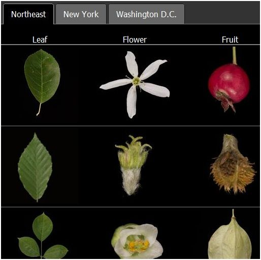 Cities   LeafSnap: Identify Plants And Trees With Your iPhone