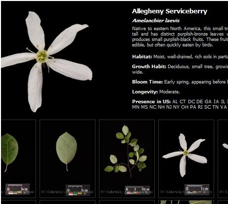details   LeafSnap: Identify Plants And Trees With Your iPhone