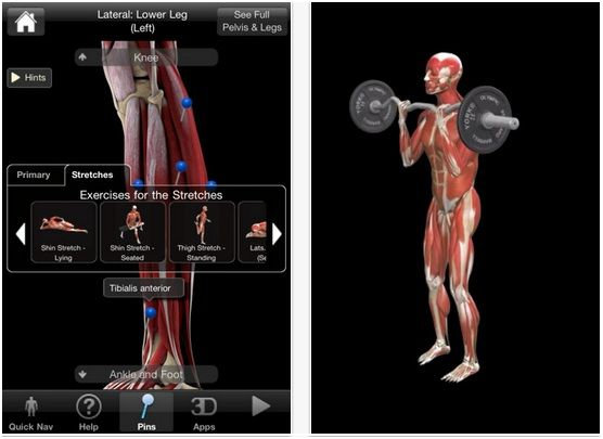 iMuscle: An Exercise App That Demonstrates Muscle Activity Through High Quality 3D Animations [iOS] angles