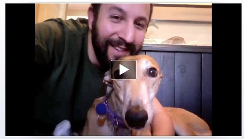 Facebook Introduces Video Calls Using Skype [News] Video Chat Dog