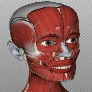 BioDigital Human – An Amazing 3D Map & Reference Of The Human Body
