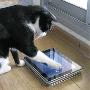 6 Apps That Turn Your iPad Into An Overpriced-Yet-Awesome Cat Toy
