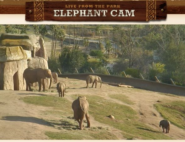The 5 Coolest Websites To Go On A Virtual Adventure elephant cam