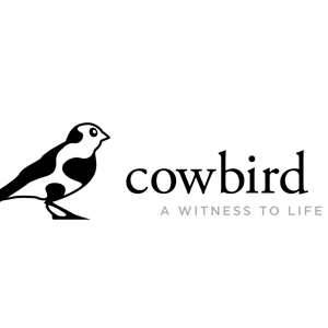 Share Your Stories On Cowbird—The Public Library of Human Experience