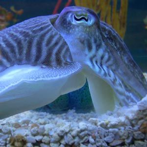 Cuttlefish: Set Up Actions And Reactions To Automate Ubuntu