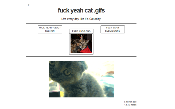 10 Of The Best Funny Cat Tumblrs To Fulfil Your Feline Fetish fuck yeah gifs