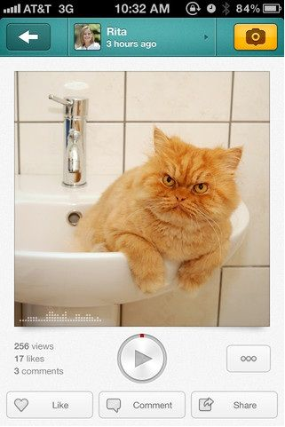 Cat   Voicepic: Add Audio To Pictures & Share Them [iPhone]