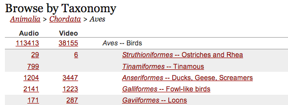taxanomy2   Macaulay Library: Listen To The Worlds Largest Collection Of Wildlife Sounds