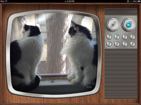 vinetube2   VineTube: Watch Vine Videos Endlessly [iPad]