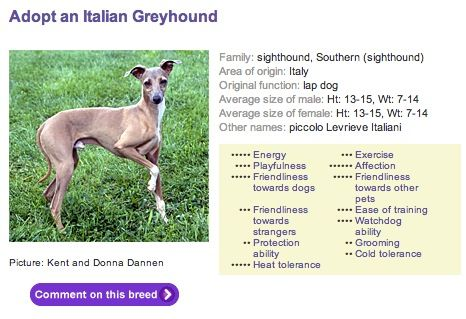 dog breed info