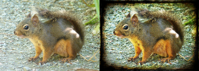 Squirrel Before After