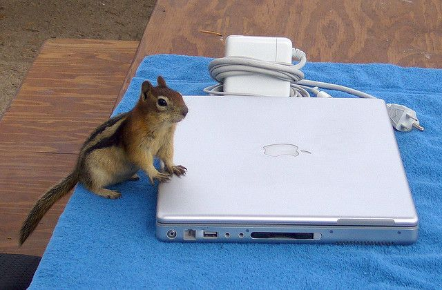 An Apple A Day: Getting The Most Out Of Older MacBooks chipmunk