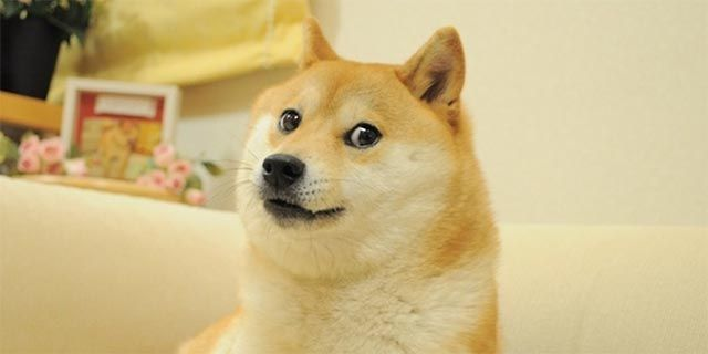 dogecoin-what-is-doge