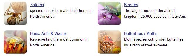 Insect-Identification-Categories