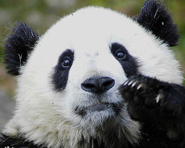 Help End Google's Search Monopoly: Use Something Else panda
