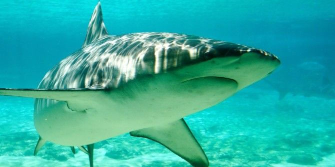 When Sharks Attack The Internet, Most People Want Net Neutrality, And More… [Tech News Digest]
