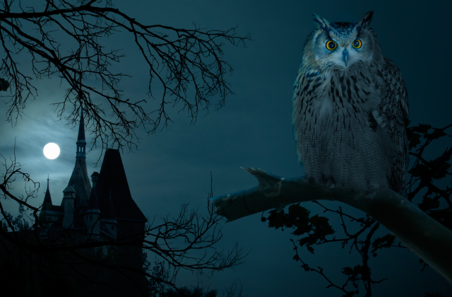 Castle and Night Owl
