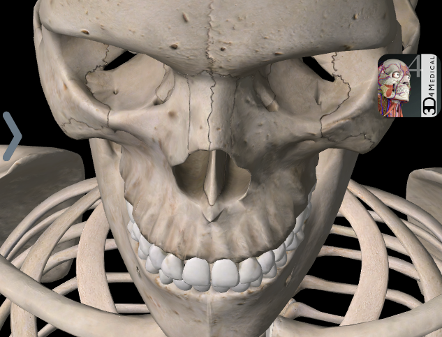 8 Things You Thought You Couldn't Learn On A Smartphone skeleton