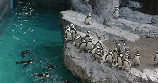 penguins-linux-jump-in