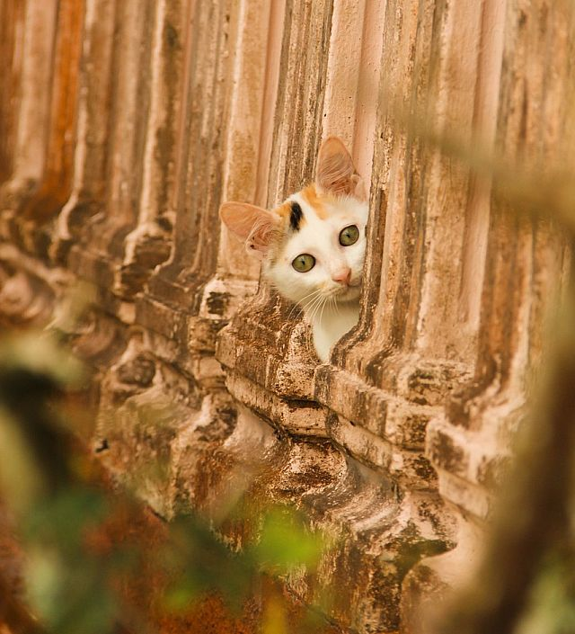 Cat Peeking