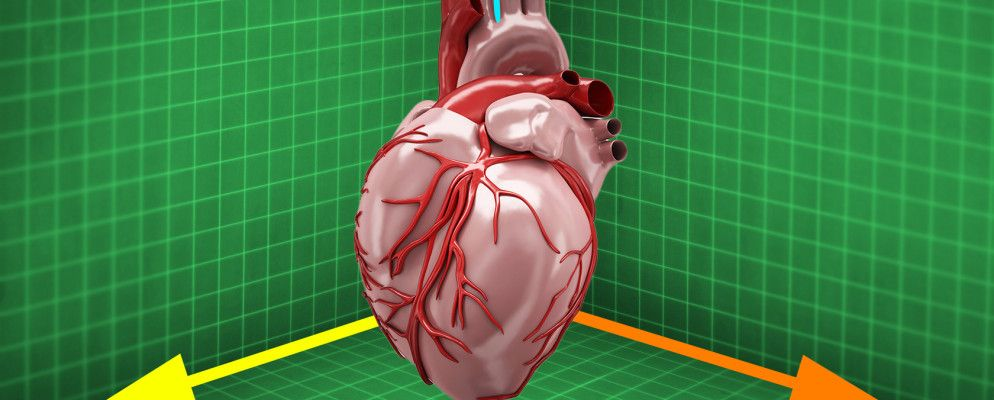 Where to Download High-Quality 3D Anatomy Models