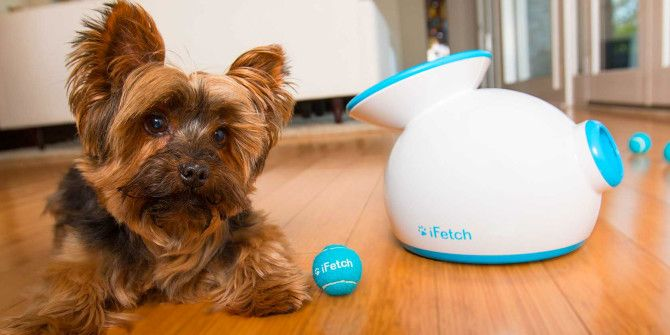6 Automated Pet Products to Make Being a Pet Owner Easy