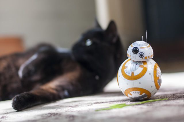 Feline the Force: Sphero Star Wars BB-8 Review and Giveaway DSC 0033