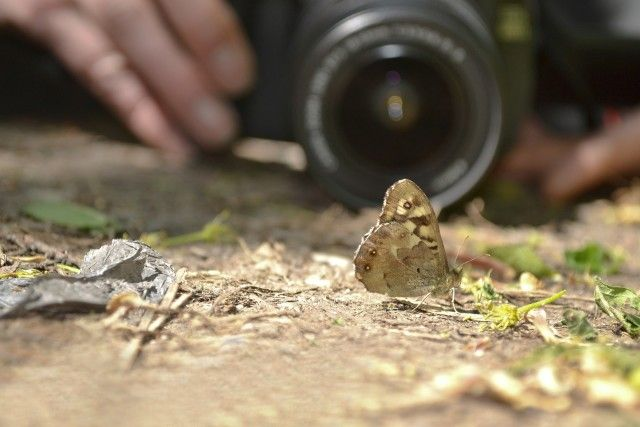 butterfly in focus