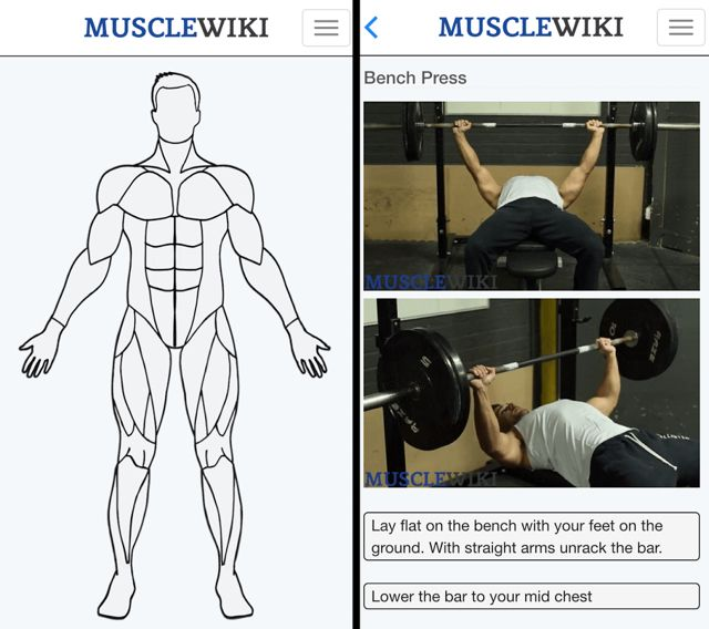 Workout-muscle-wiki