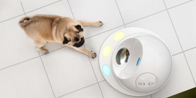 Become a Smarter Pet Owner With These Gadgets