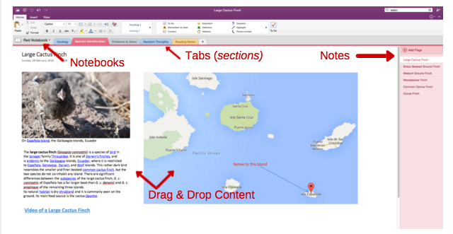 OneNote Organization Example Screenshot