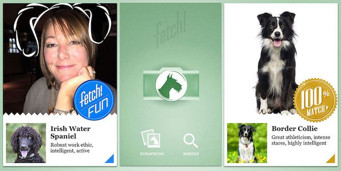 Microsoft Apps What Dog Fetch