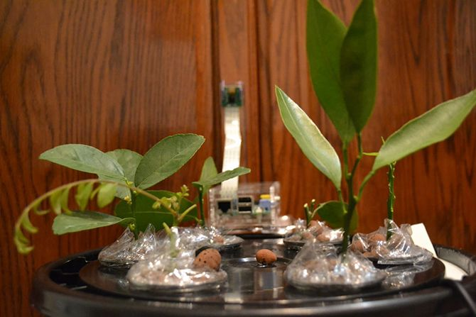 6 Ways a Raspberry Pi Can Help You Prepare for the Apocalypse pi aeroponics 670