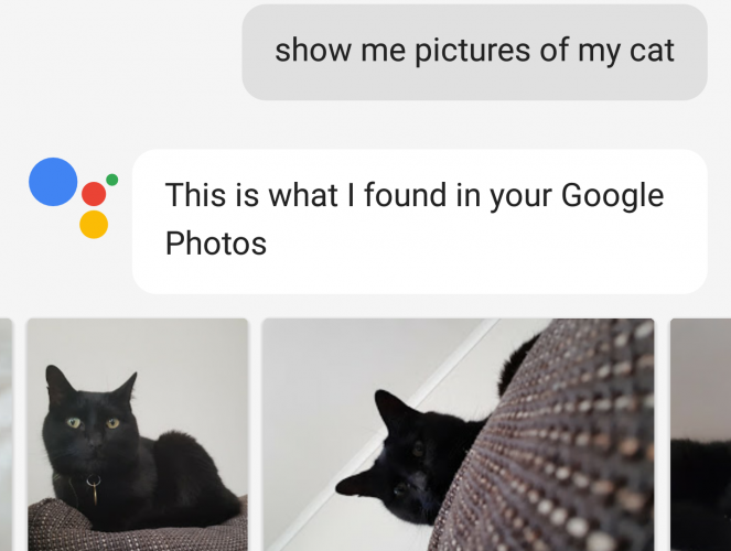 google assistant cat