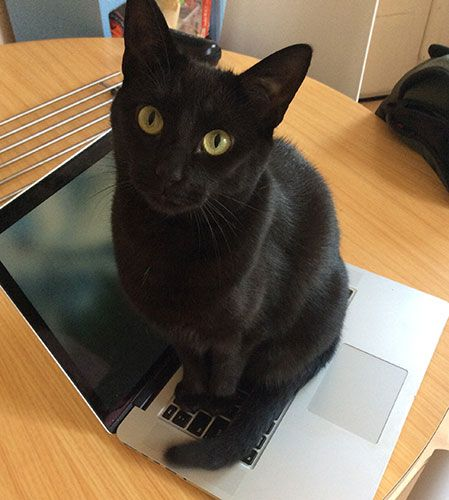 5 Things You Can Do to Silence a Noisy Laptop Fan cat laptop