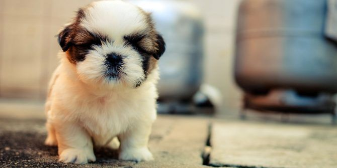 For the Love of Dog: 5 Best Places for Cute Puppy Photos and Videos