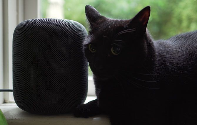 HomePod with Black Cat