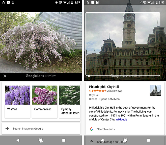 Google Lens Identify Plants and Buildings